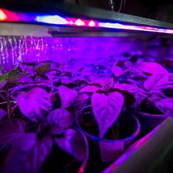 Plants under led grow lights