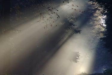 Fog in the rainforest