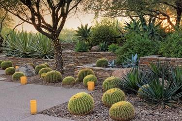 Desert Landscaping Ideas