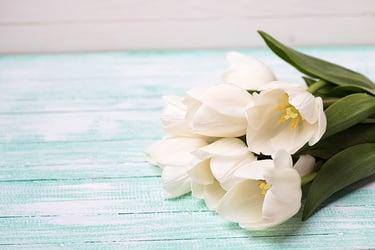 Types of White Flower