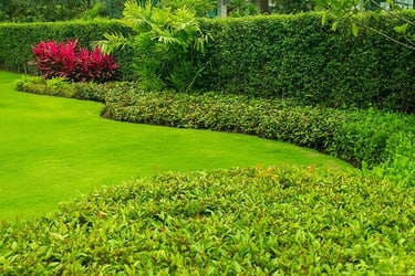 Types of Hedges & Hedge Plants