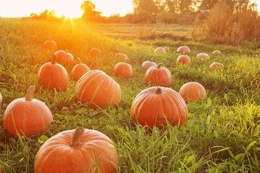 Types of Pumpkins
