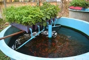 Aquaponic DIY plans