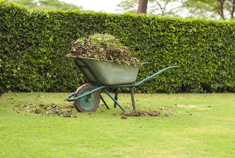 Wheelbarrow filled with leaves on green grass lawn in a farm garden