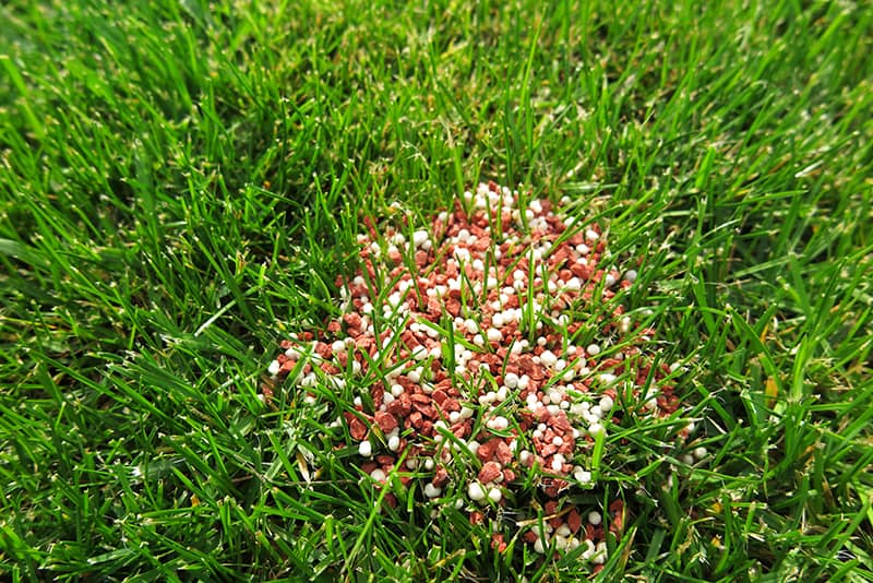 Organic lawn fertilizers