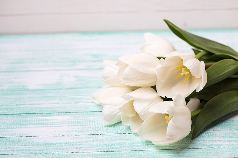 12 Types of White Flowers with Pictures and Growing Guide | Trees.com