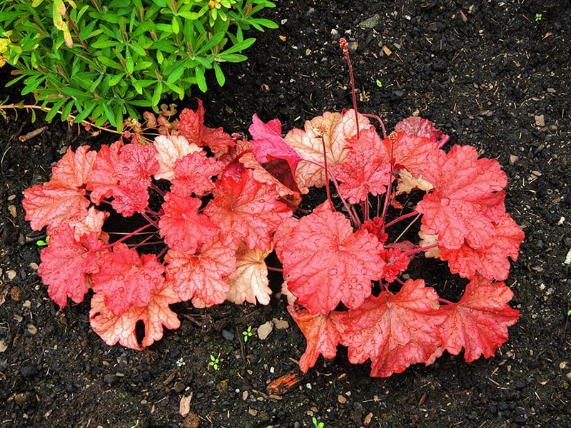 Best Shade-Loving Plants