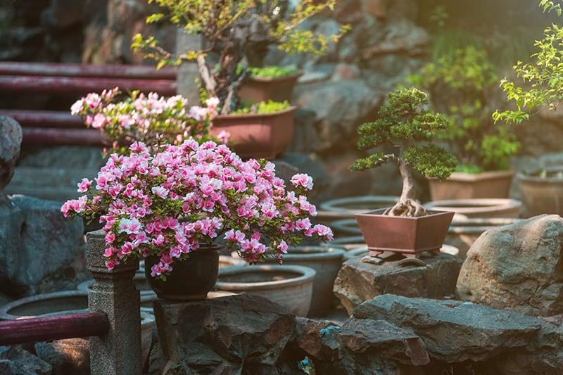 Best Plants for a Japanese Garden