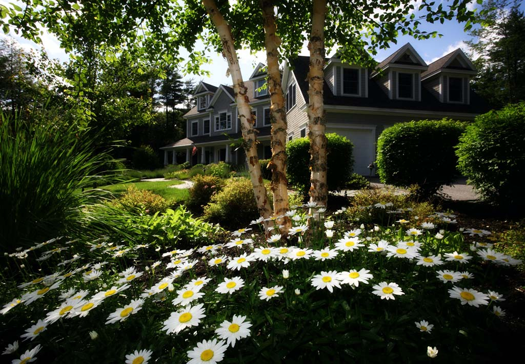 white and yellow daisies in front of a gray and black wooden house during day