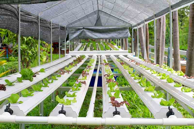 challenges garden growing gardening articles hydroponic indoor special while