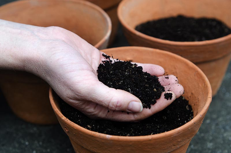 5 Best Potting Soil For Plants