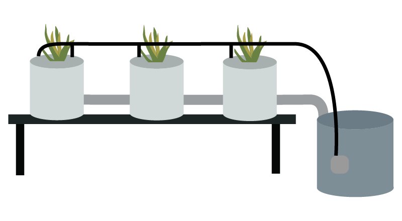 Dutch Bucket / Bato Bucket Hydroponic System   Green and Vibrant