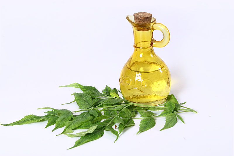 What Are The Benefits Of Neem Oil For Beard, Hair & Skin that You Need to Know