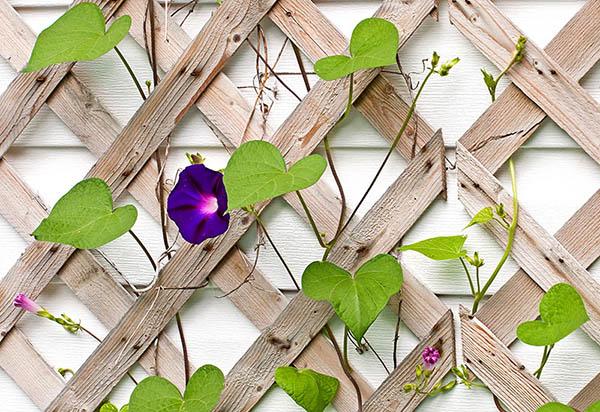25 Awesome Garden Trellis Ideas Green And Vibrant