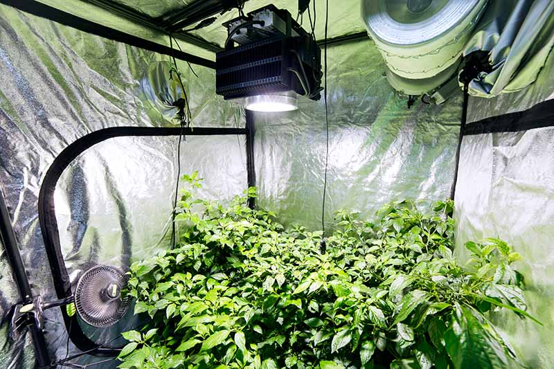 Grow Room Ventilation