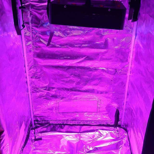 Grow Tent Setup & 10 Easy Steps to Set Up a Perfect Indoor Grow Tent | Green and Vibrant