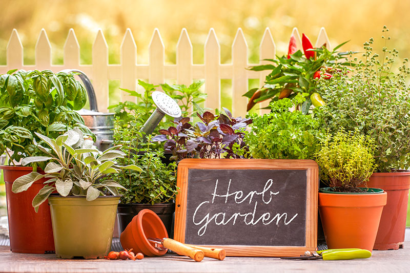 25 Pretty Herb Garden Ideas Green And Vibrant