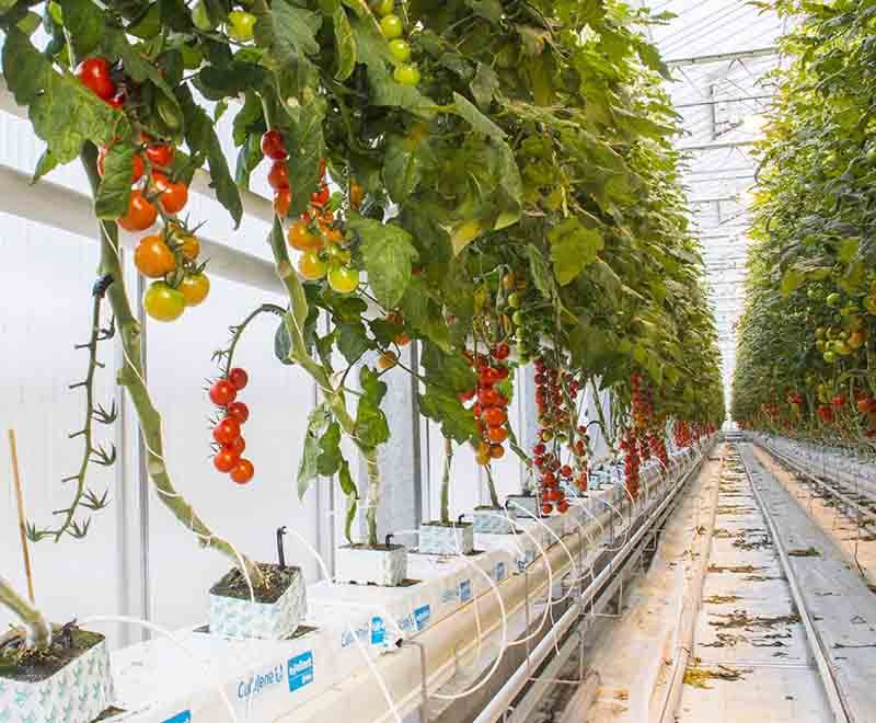 Hydroponics Gardening Tips Green And Vibrant