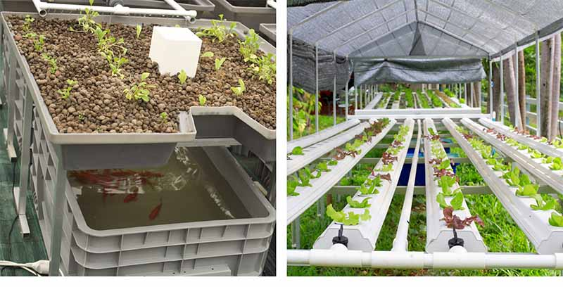 Hydroponics vs  Aquaponics - A Complete, and Honest