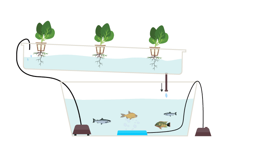 A Complete Guide to Aquaponic Gardening | Green and Vint on pond garden designs, diy garden designs, indoor aquaponics system designs, indoor garden designs, best aquaponic designs, backyard garden designs, berry garden designs, aeroponic garden designs, hydroponic garden designs, aquaculture garden designs, green garden designs, aquaponic diy designs, art garden designs, organic garden designs, greenhouse designs, for backyard aquaponic designs,