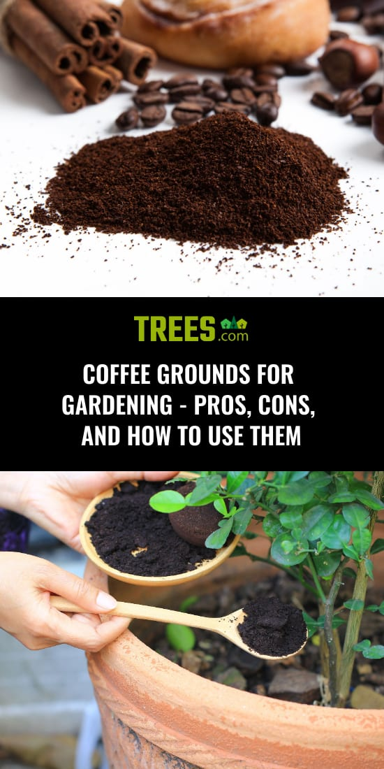 Coffee Grounds for Gardening - Pros, Cons, and How to Use Them
