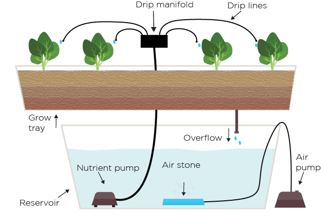 Hydroponic Drip System Explained Green And Vibrant