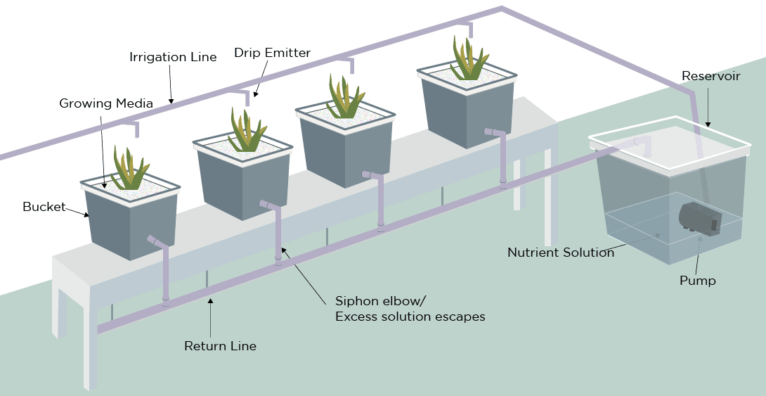 Dutch Bucket System