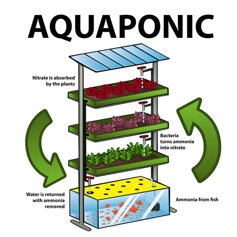 Hoes Aquaponics works