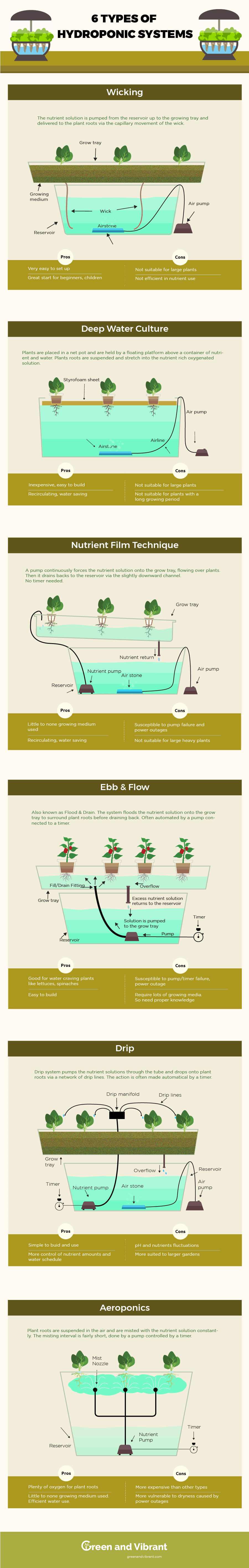 Hydroponic System Infographic