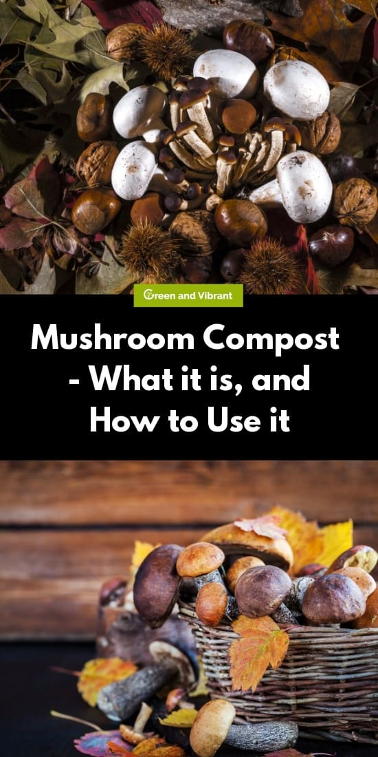 Mushroom Compost - What it is, and How to Use it