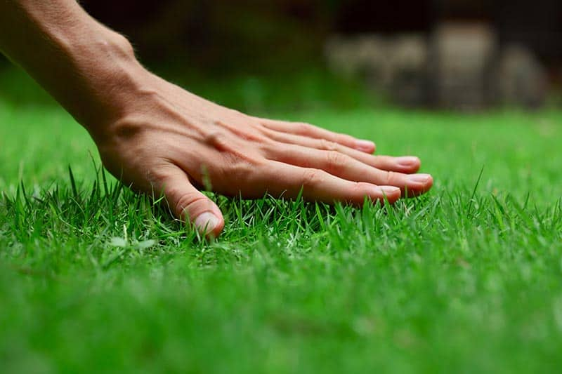 Signs that shows you need to aerate lawn