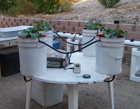 Simple Drip System With Buckets