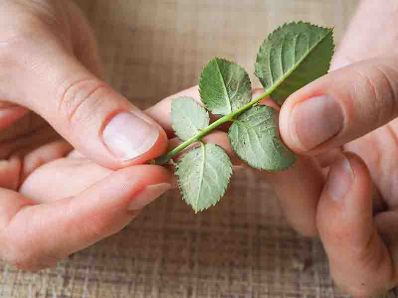 All about Spider Mites and How to Get Rid of Them | Green and Vibrant