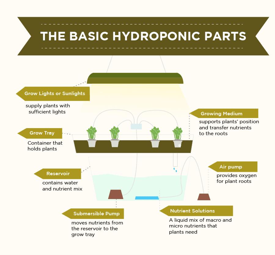 Basic Parts of hydroponics