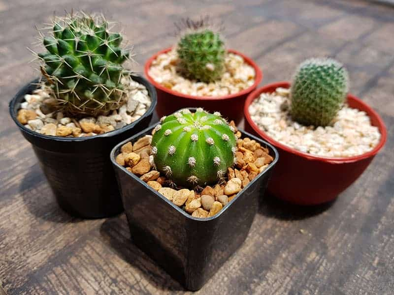 25 Beautiful Cactus Garden Ideas Green And Vibrant