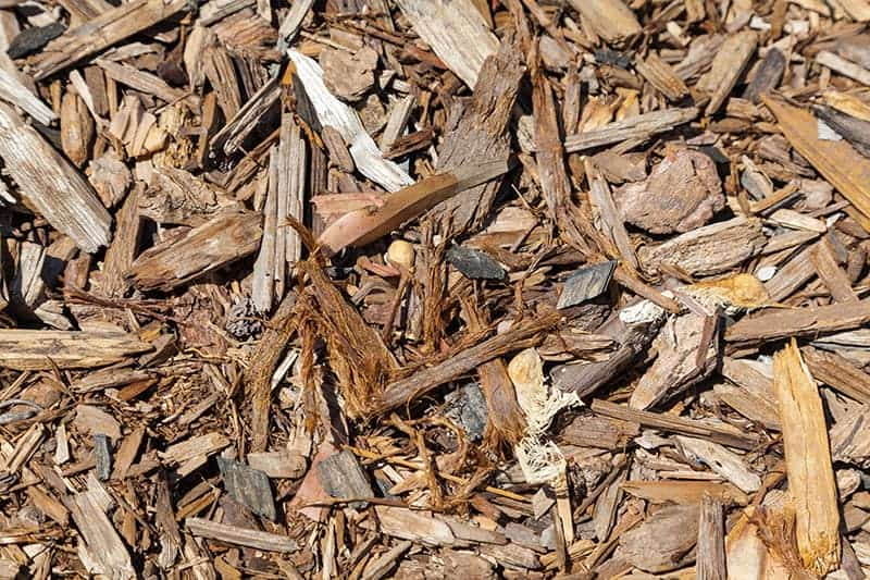 Cedar bark chips in the garden
