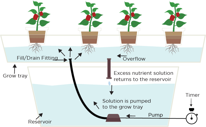 Ebb & Flow (Flood and Drain) Hydroponic System | Green and
