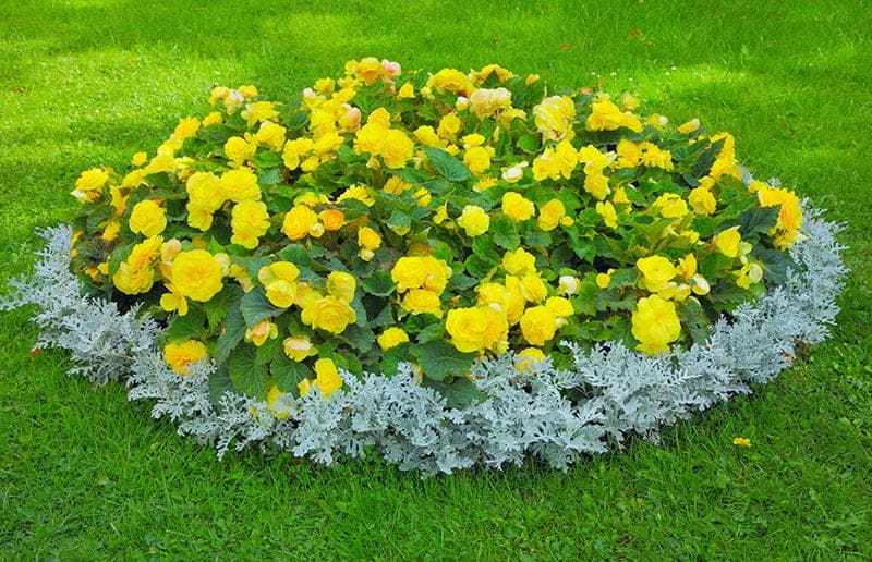 Oval Flower Bed
