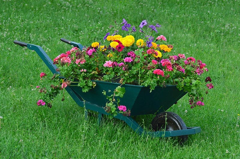 Upcycled Wheelbarrow Raised Bed