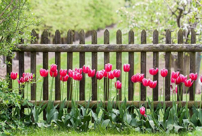 25 Fantastic Garden Fence Ideas Green And Vibrant
