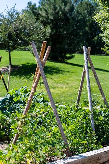 25 Awesome Garden Trellis Ideas Green And Vibrant