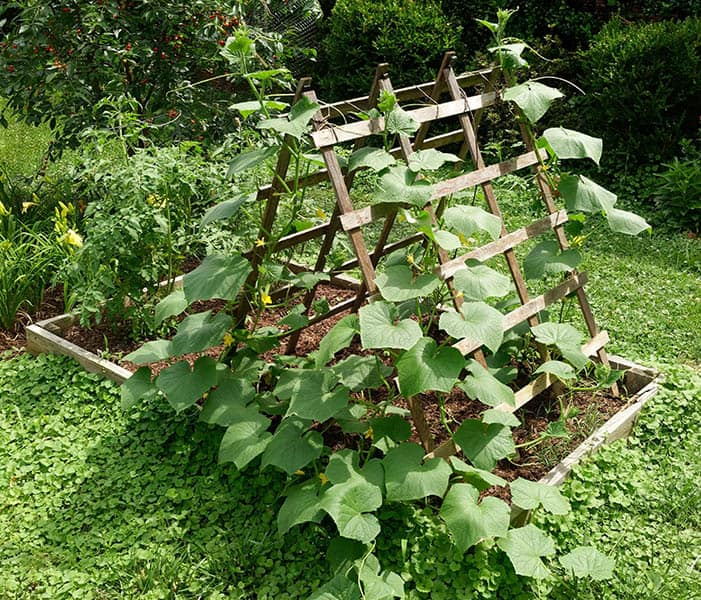 The Two-Side Garden Trellis