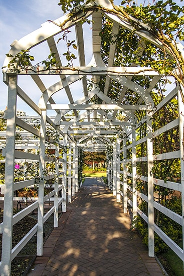 White Arched Wooden Trellis