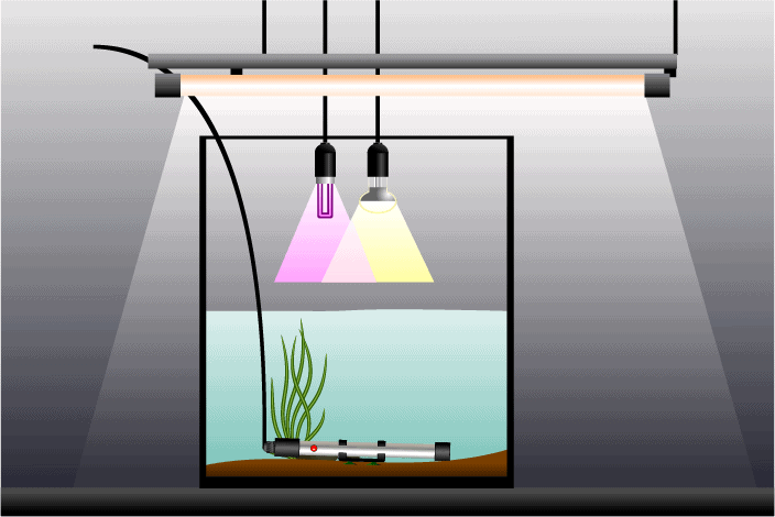 Heater in a high and narrow aquarium