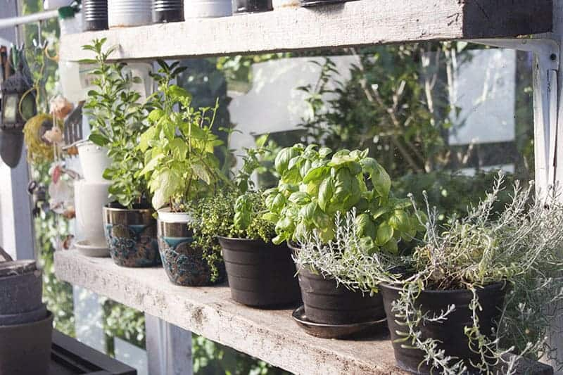 Healthy Shelf-y Herbs