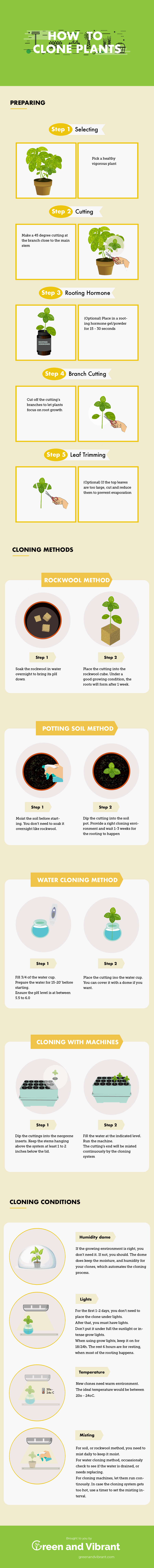 how to clone plants infographic