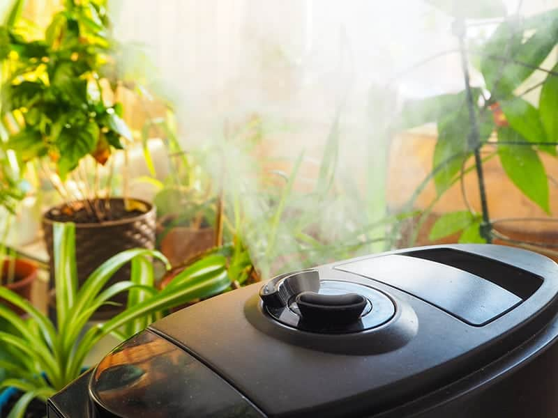 Humidifiers for grow rooms and grow tents