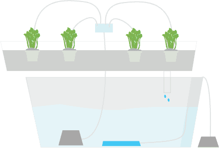 hydroponic gardening the definitive guide infographic