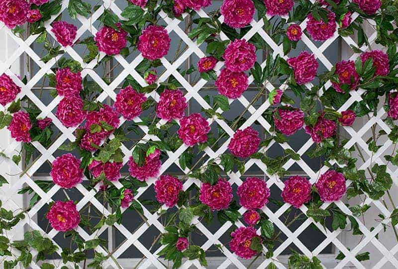 Flowering Fence