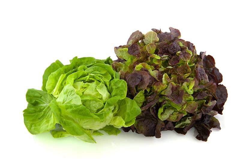 Lettuces types